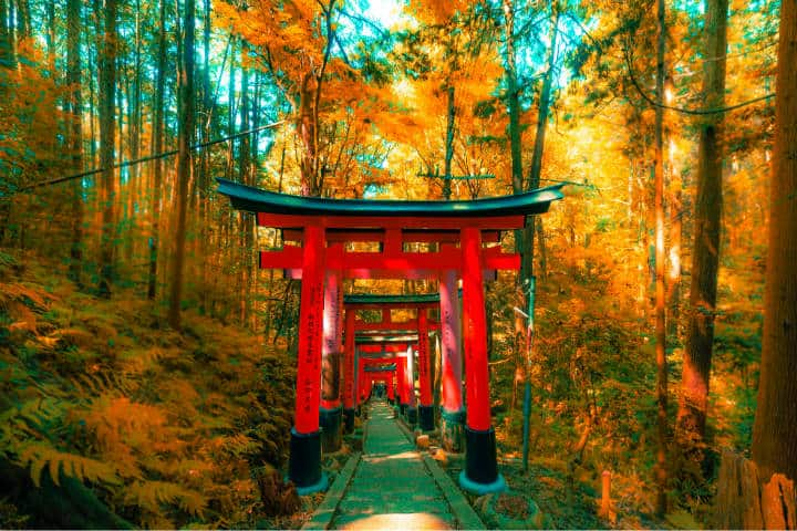Kioto Fushimi Inari-Taisha. Foto Jezael Melgoza Unsplash