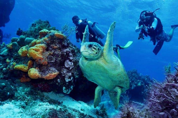 La fauna que habita aquí es sorprendente Foto: Excursiones Riviera Maya