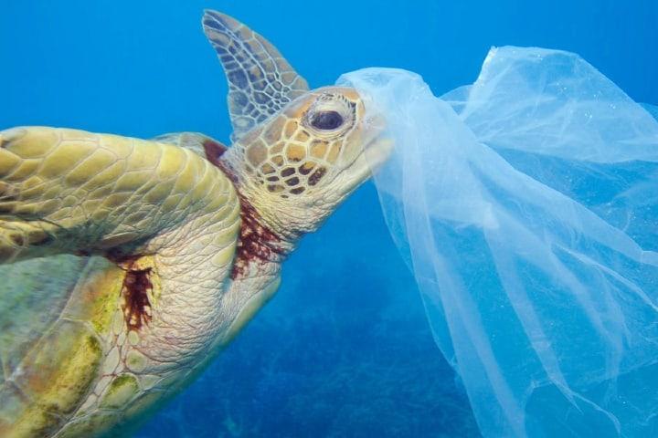 Los desechos humanos se han vuelto el principal peligro de la tortuga. Foto: WWF
