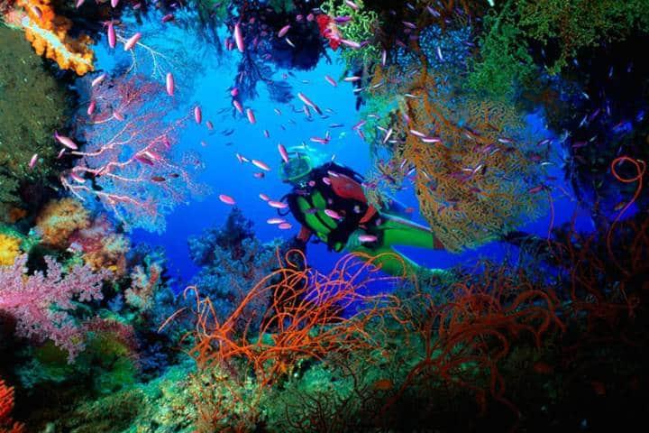 ¡Admira cuántos colores hay en el arrecife! Foto: Aquaworld