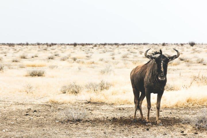 Un bello ejemplar durante su migración Foto: remi jacquaint | unsplash