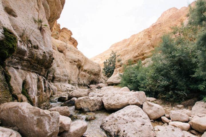 La zona de la Reserva Natural de Ein Gedi te enamorará. Foto: Archivo