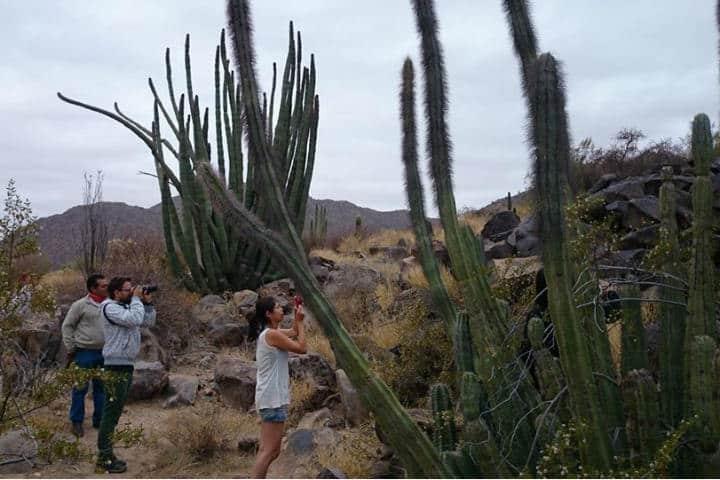 Sierra del Pinacate en Sonora. Imagen: Turismo Taruk