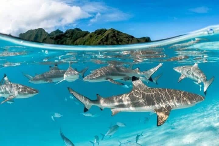 ¿Dónde más crees que podrás obtener una fotografía igual a esta? Aventúrate a conocer la Isla Tiburón. Foto: Ecoticias