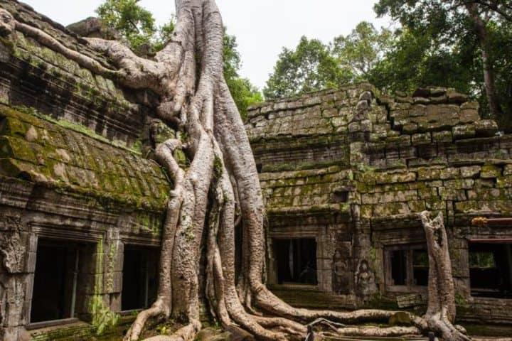 Una raíz de árbol reclamando su lugar en uno de los templos. Foto: Asiadonde.