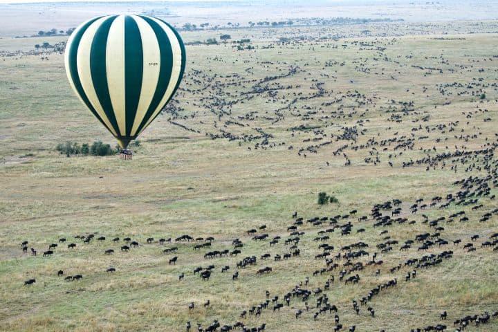 Vista aérea de la migración del ñu Foto: Jason Hafso | unsplash