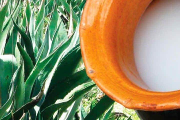 Aunque a muchos no les agrade, el pulque es parte de la identidad de México, ¡Es una delicia! Foto: Invdes