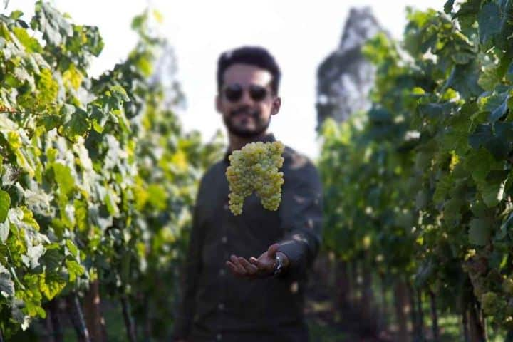 Ven a conocer las tierras vinícolas que ofrece Querétaro Foto: Brideadvisor