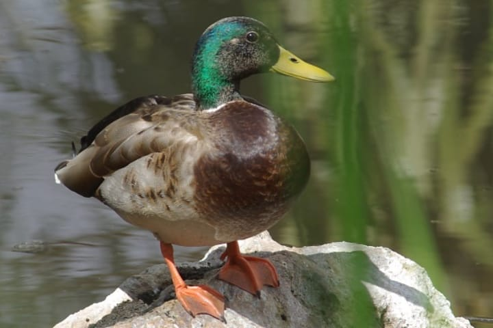 ¡Si vas a un avistamiento de esta especie debes estar preparado en todo momento! Foto: Pat Goltz