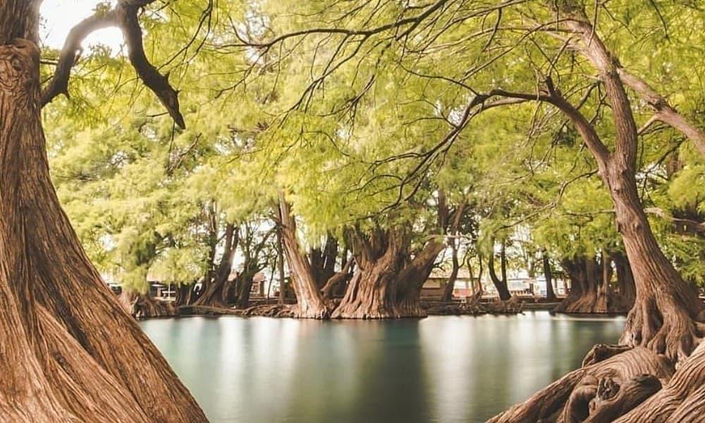 Arboles en Lago Camécuaro-Foto de instagram pasionxmichoacan