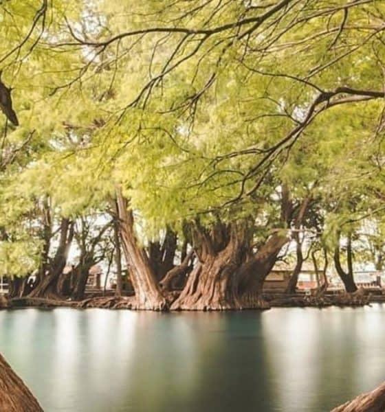 Arboles en Lago Camécuaro Foto: de Pasión x Michoacán