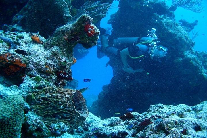 ¿Qué animales marinos crees que encuentres en los mares de Ensenada? Foto: J_Agustin_n