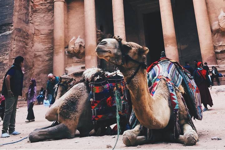 Camello en Tesoro Petra Foto: Asiviajo