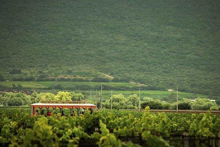 ¿Qué te parecen los campos de vid de Freixenet? Foto: Freixenet México