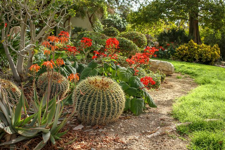Catus dentro del Jardín Botánico Ein Gedi. Foto: Matías Callone