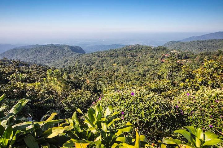 Chiapas Cultivos Foto: Sandra Salvado
