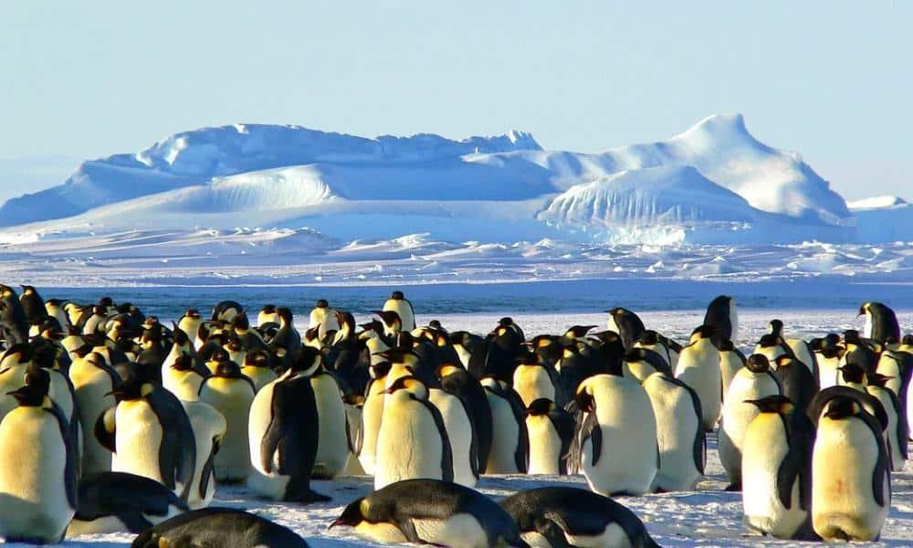 Colonia de pingüinos Foto Archivo