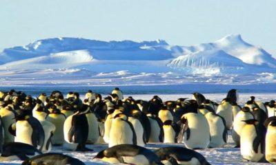 Colonia de pingüinos Foto: Archivo