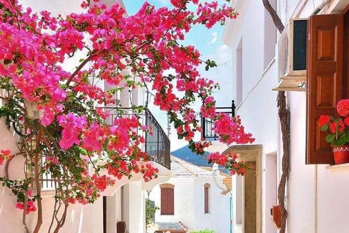 Colores en Skopelos, isla de Mamma Mía. Foto: catherine_cosmopolite