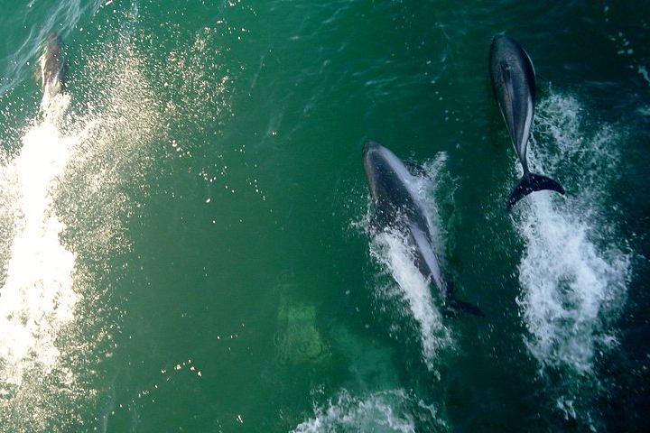 Delfín arrebata iPad a turista distraída. Delfínes. Imagen. Diegogallotti