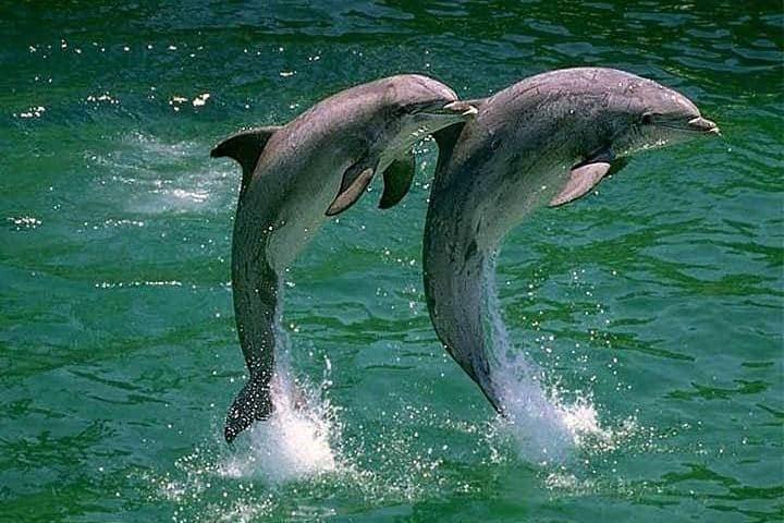 Defin arrebata iPad a turista distraída. Delfines. Imagen. Pipenolc