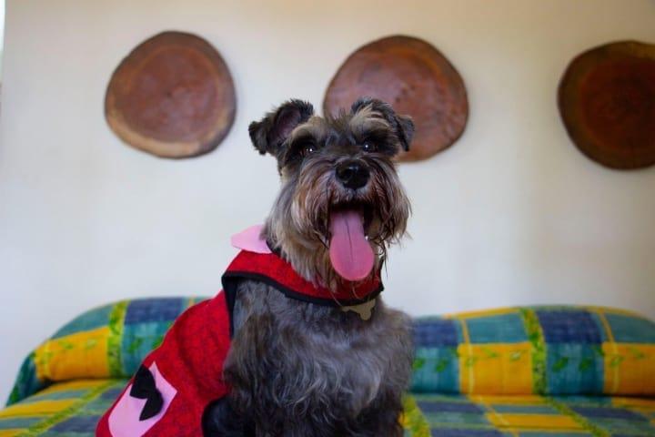 Disfruta con tu mascota, ¡El hotel es pet friendly! Foto: Archivo