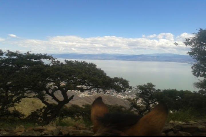 Disfruta con tu mascota de la ruta Los Trojes-Chupinaya para hacer senderismo en Chapala. Foto: Senderos de México