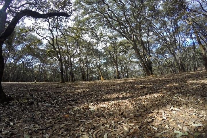 Ruta para senderismo en Chapala: El Caracol. Foto: Senderos de México