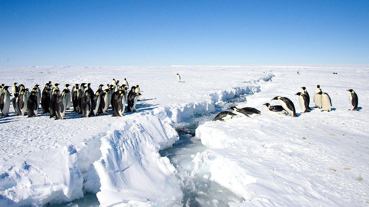 El pingüino emperador en la Antártida. Foto Christopher Michel