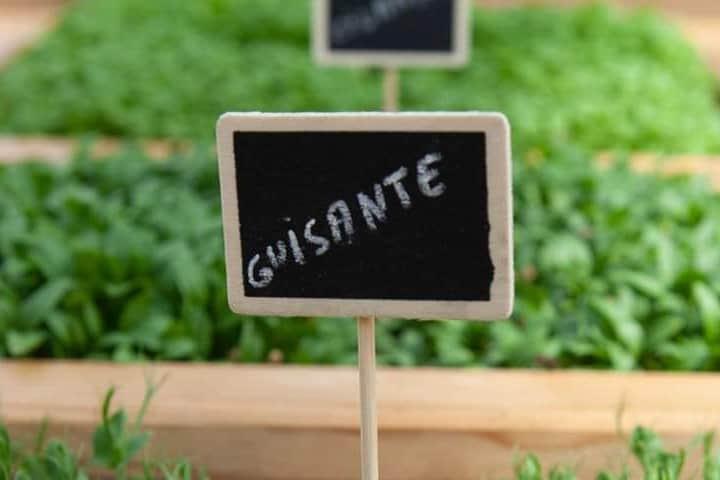 Plantación de ingredientes en el Restaurante Foto: Azurmendi | Facebook