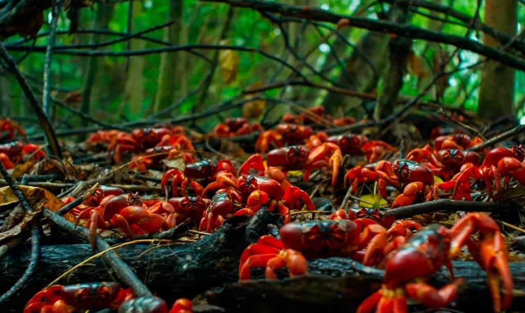 """Debería de ser llamada """"Isla de los Cangrejos Rojos"""", ¿No crees? Foto: GrowPro Experience"""