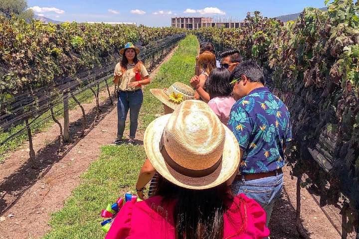 Los tours por estos viñedos ¡Te van a encantar! Foto: Archivo
