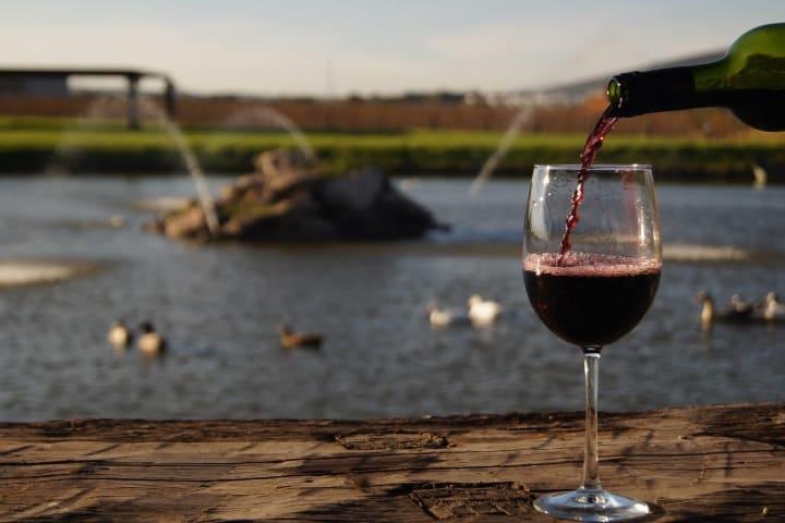 Los vinos de éste viñedo son exquisitos Foto: Viñedos Azteca | Facebook