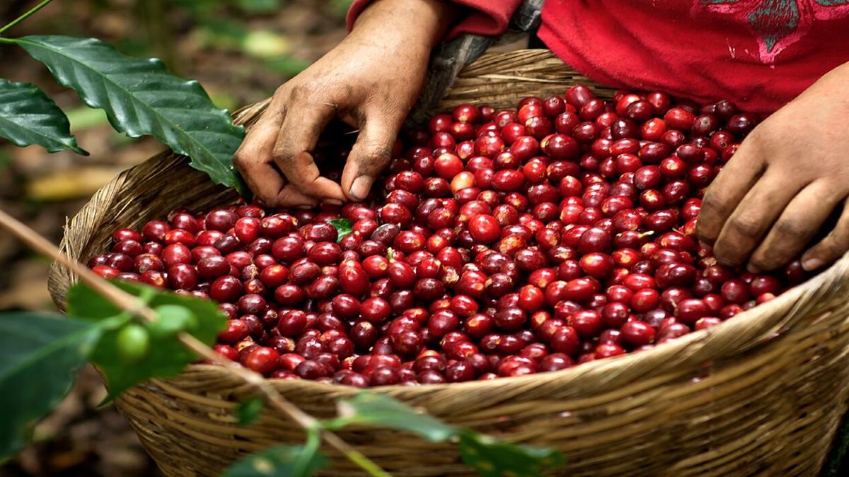 Recolección de granos Foto: Food & Wine