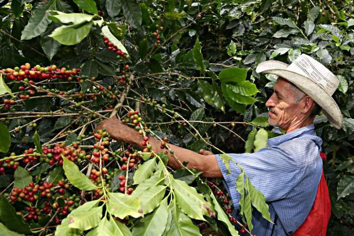 Recolector Foto: Imagen Política de Veracruz
