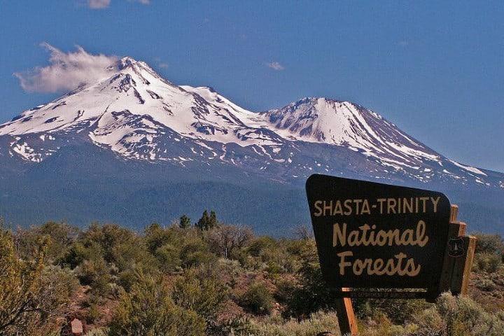 Bosque Shasta Trinity cerca del Monte Shasta. Foto: Blanca Tello Cadivich
