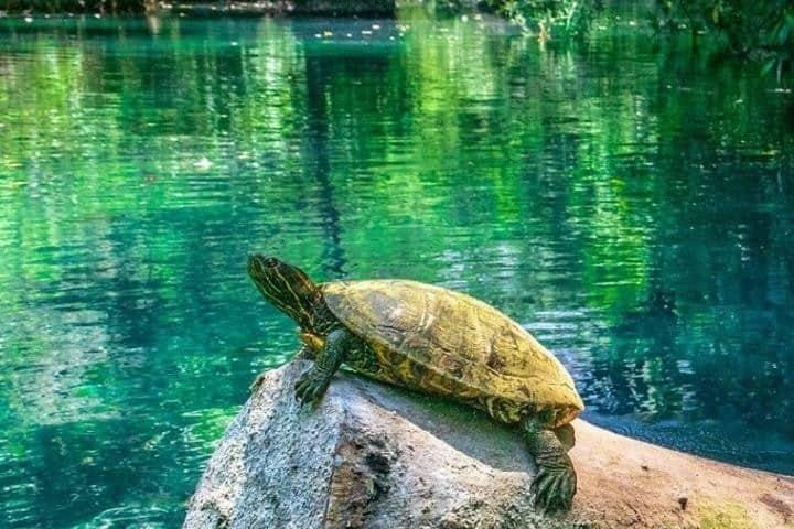 Cuida toda la flora y fauna en cada visita a la naturaleza. Foto: Jorgecastilloz