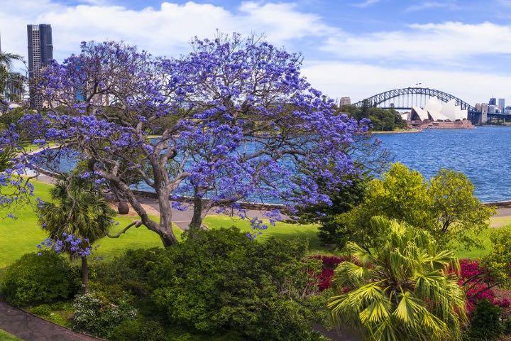 Una vista espectacular desde el Jardín Botánico de Sydney Foto: Sydney | Página Web
