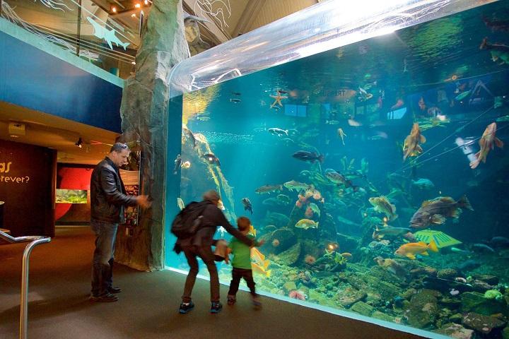 ¿Qué te parece el acuario del Parque Stanley? Foto: Tips para tu viaje