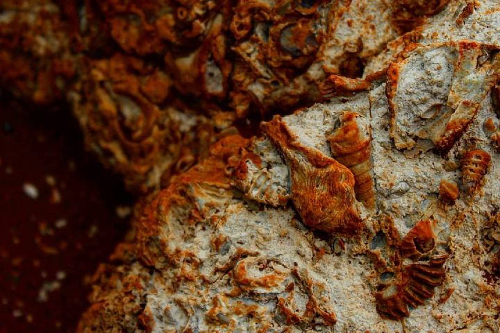 Si paseas por los ríos, podrás encontrar a los mencionados fósiles. Foto: doc.thor_wong
