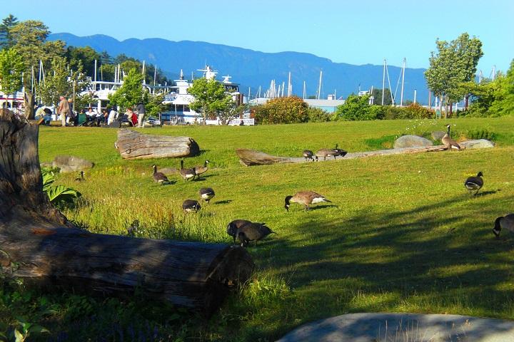 ¿Cuántas aves puedes nombrar? Prepara tus libros de aves para visitar la zona de aves en el Parque Stanley. Foto: Minube