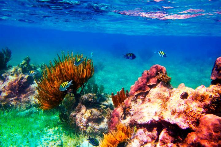 Arrecifes Foto: Aquaworld