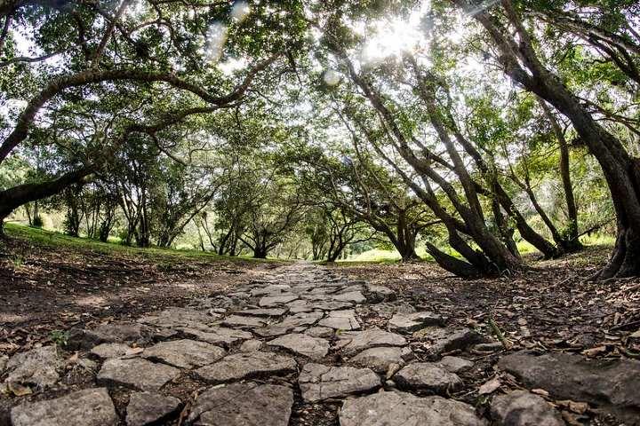 Camino de piedra en la zona arqueológica. Foto: Arturo Jaramillo
