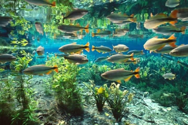 El Acuario Natural es sin duda una de las actividades más bonitas. Foto: Raphael D