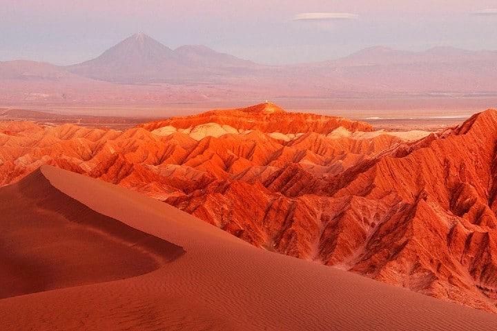 Flores del desierto de Atacama en Chile