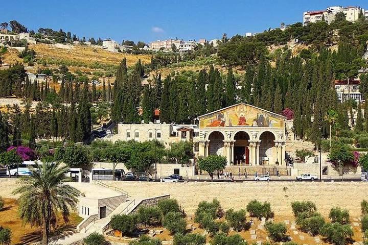 Jardín de Getsemaní. Foto: evachargergilphotos