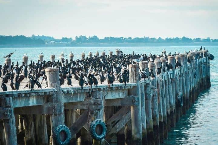 Los muelles son visitados por gran cantidad de pingüinos Foto alps2ocean