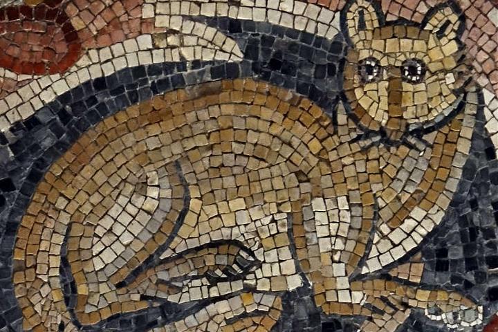 Mosaico de gato Foto: Universes in universe