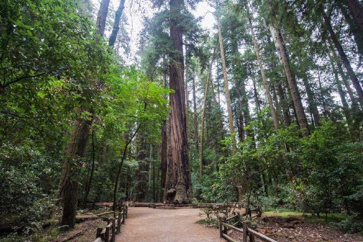 Parque Redwood en South Surrey, una de las locaciones de Sabrina. Foto: Archivo