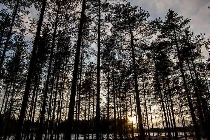 En el parque podrás avistar auroras boreales. Foto: Travel in Shots